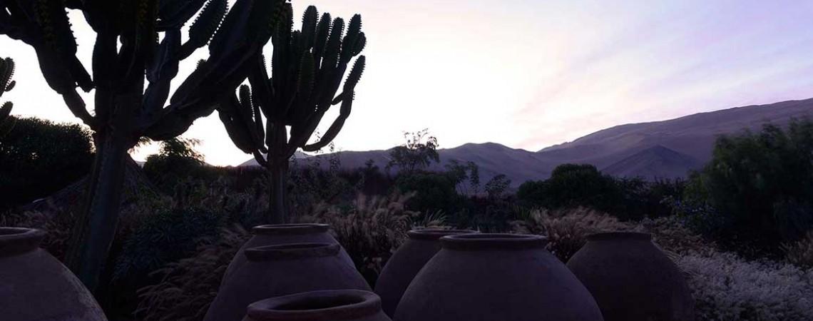 cactus desierto hotel
