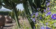 flowers atacama desert